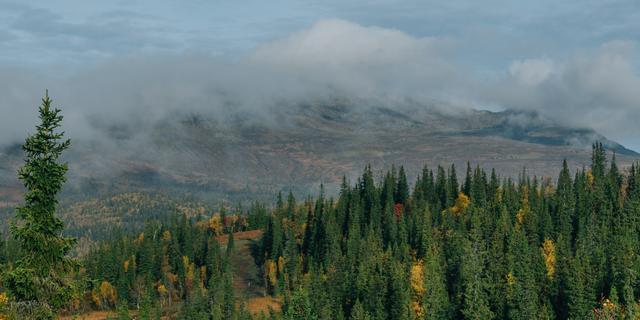 Meerdere dorpen in Zweden ontruimd vanwege grote bosbranden