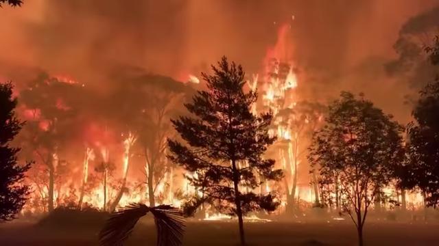Wat is de oorzaak van de verwoestende bosbranden in Australië?