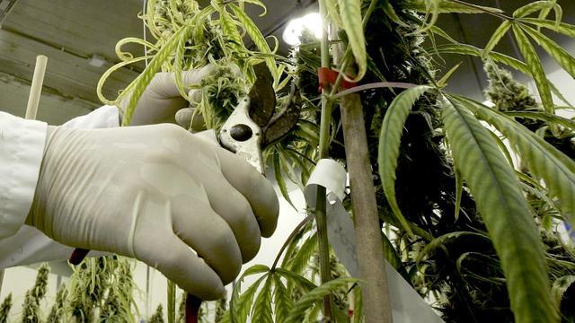 Honderden wietplanten uit woning in Amstelveen gehaald