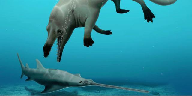 Egyptische wetenschappers ontdekken eerste vierpotige walvis in Afrika