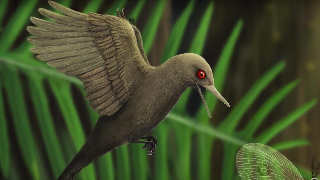 Nieuwe vogelachtige dinosaurus ontdekt