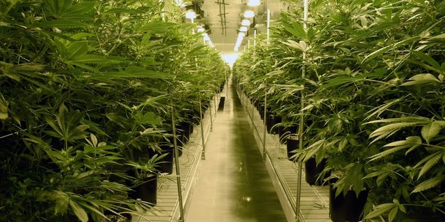 Amerikaans Huis van Afgevaardigden wil cannabis uit strafrecht halen