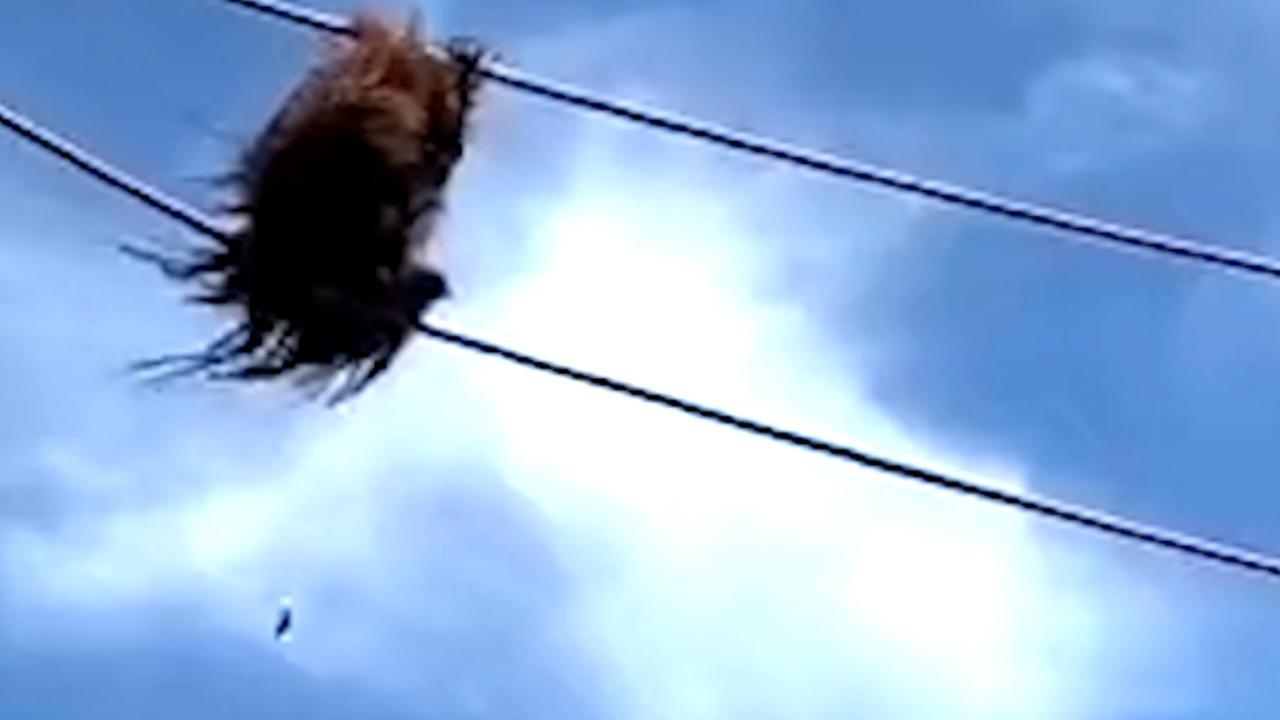 Orang-oetan poept richting bezoekers in dierentuin in Washington