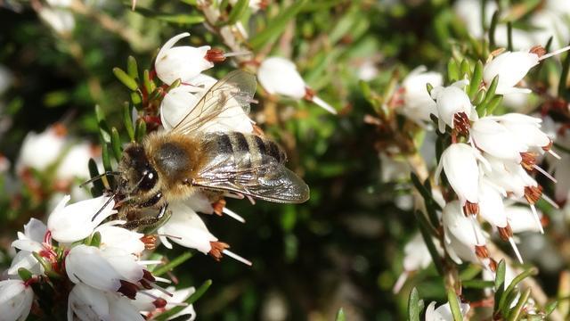 Actieplan moet bijenstand Zeeland verbeteren