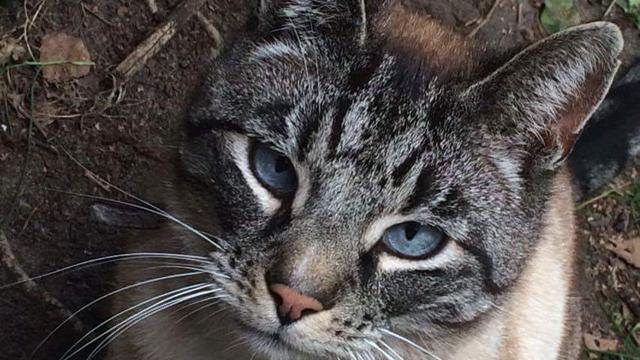 Britse politie stelt vast dat beruchte kattendoder niet bestaat