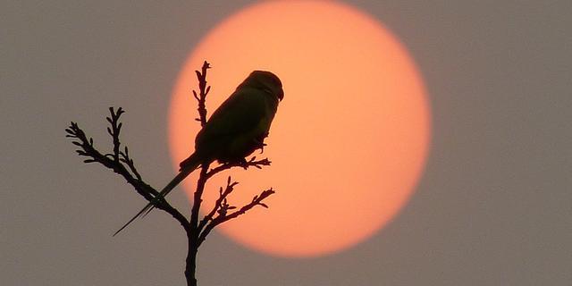 Rode zon aan de hemel door stofdeeltjes uit Sahara