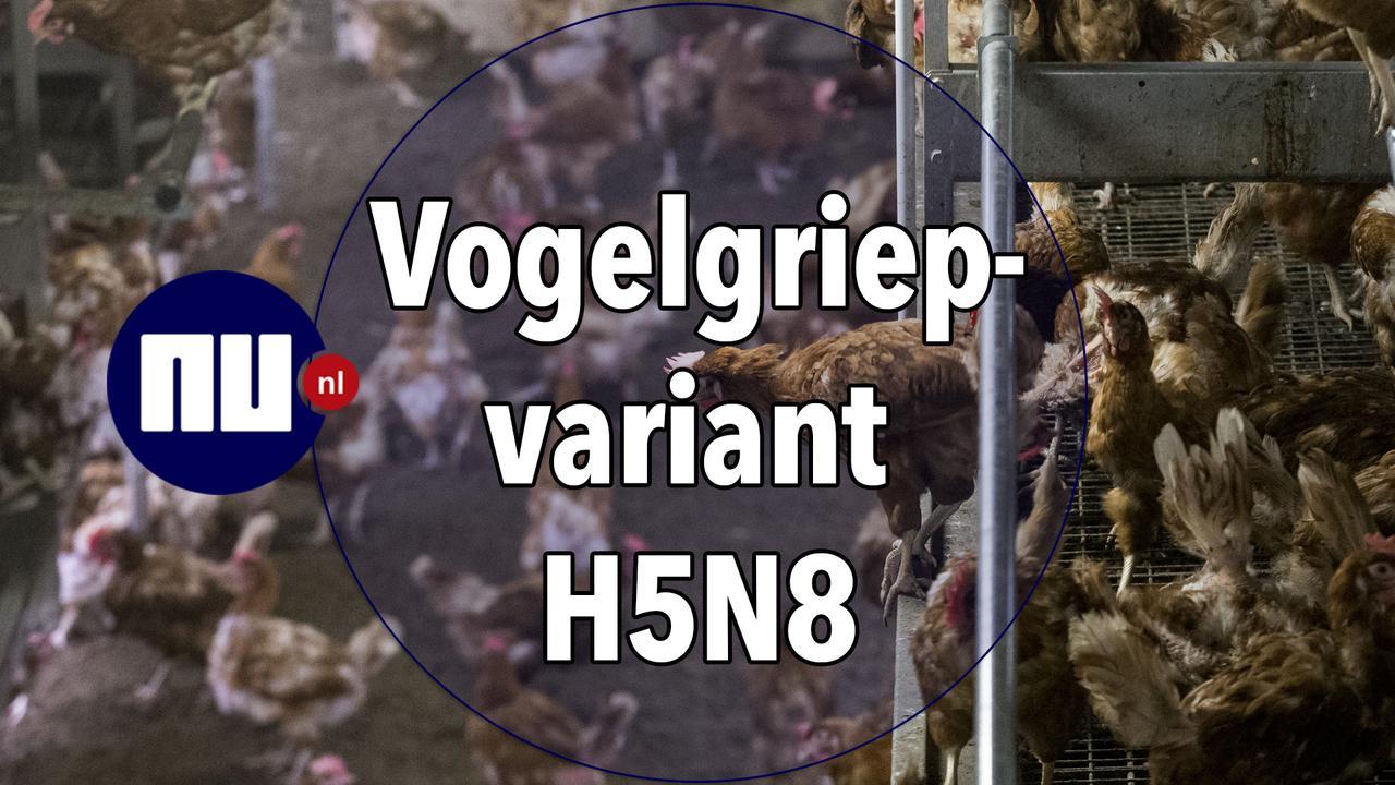 Dit moet je weten over de vogelgriepvariant H5N8