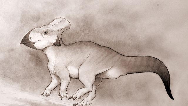 Kleine dinosaurus blijkt afkomstig uit 'verloren werelddeel'