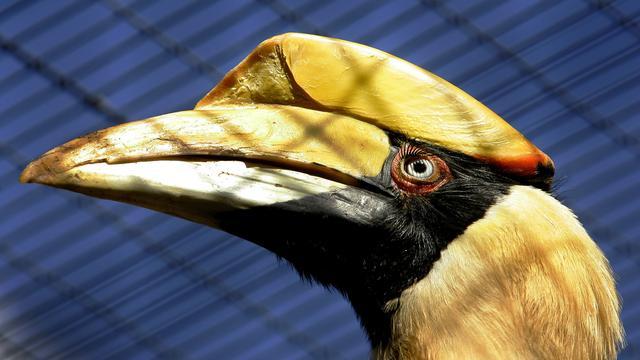 OM eist tien maanden cel voor vogelroof Avifauna