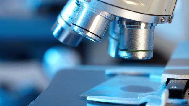 Gif van Braziliaanse wesp doodt kankercellen