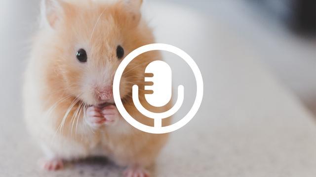 'Een hamster leeft korter dan de Brexit nu duurt'
