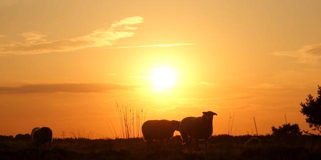 Weerbericht: Overwegend zonnig en op de meeste plaatsen droog