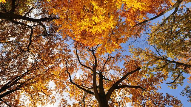 'Belegger moet zich voorbereiden op wilde herfst'