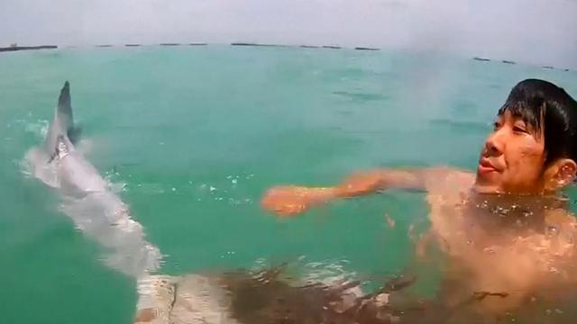 Reddingswerkers Singapore bevrijden dolfijn uit net