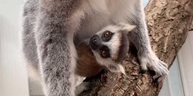 Gegevens van honderdduizenden dierentuin- en pretparkklanten gelekt