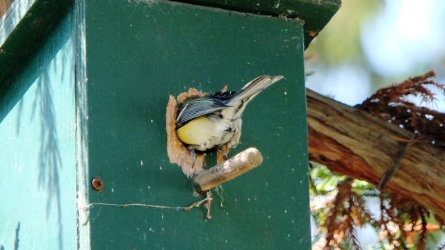 Camera's in nestkastjes Vogelbescherming weer aangezet