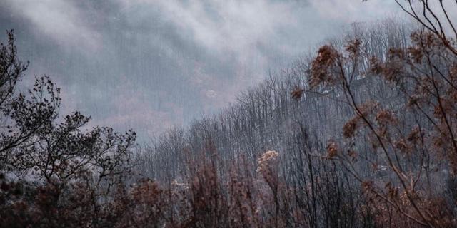 Australische deelstaat New South Wales na 240 dagen vrij van bosbranden