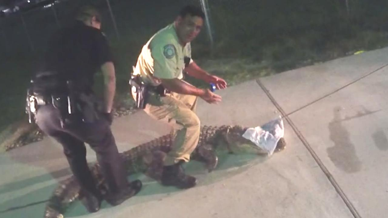 Agenten vangen alligator met blote handen in Texas
