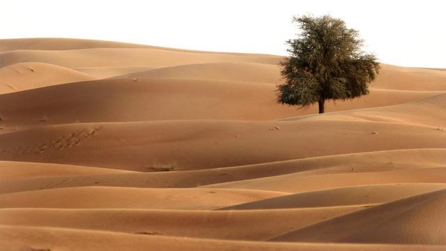 Dubai legt fietspad aan in woestijn