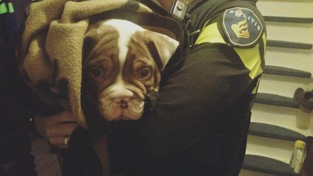 Gestolen puppy aangetroffen in woning Tuinzigt