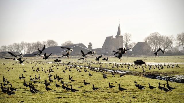 Provincie Overijssel op vingers getikt om afschieten ganzen