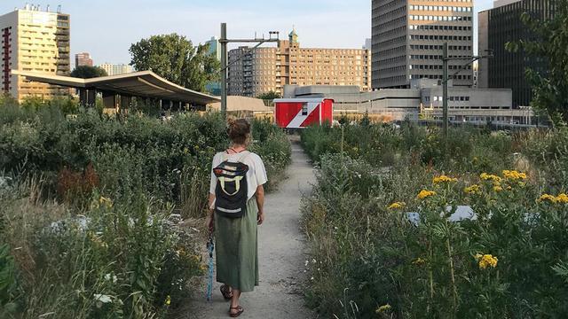 De potentie van het dak: 'We dromen van een groen daklandschap'