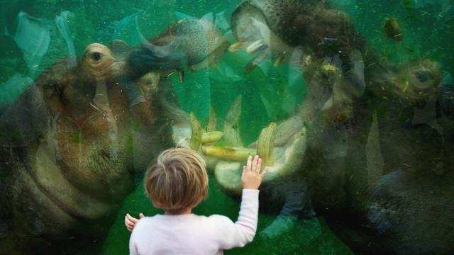 Amerikaanse vrouw wil dierentuin Keulen 18,5 miljoen euro nalaten