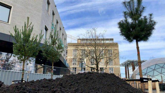 Eerste bomen geplant op Vestdijk voor metamorfose van gebied