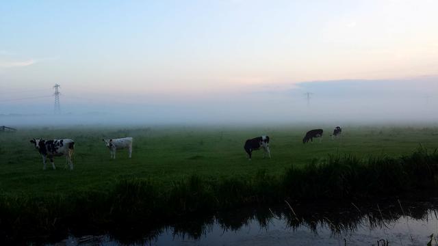 Waarschuwing voor dichte mist tijdens ochtendspits