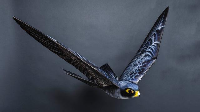 Nederlandse robotvogel gaat vogels verjagen op Canadees vliegveld