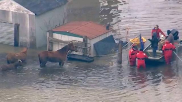 Hulpdiensten redden paard en veulens van overstroming Chicago