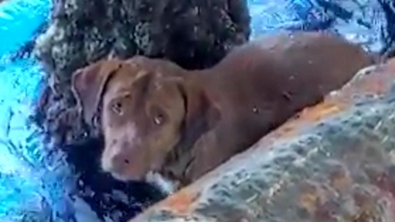 Olieboorders redden ver van de Thaise kust een hond uit zee