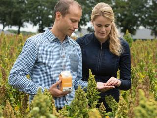 Quinoa is modevoedsel voor hipsters? Rens Kuijten denkt daar anders over. De zaden kunnen zelfs de nieuwe aardappel worden.