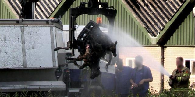 Dierenwelzijnsorganisaties na nieuwe stalbrand: 'Geld gaat vóór dieren'
