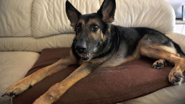 Ophef over bange hond die wordt gedwongen voor filmopnames A Dog's Purpose
