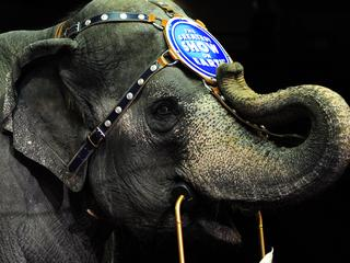 Laatste olifantenshow in Ringling Brothers and Barnum & Bailey Circus