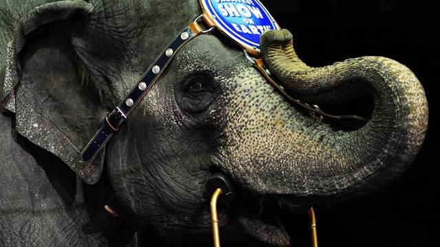 Amerikaans circus stopt na 145 jaar met olifantenvoorstelling