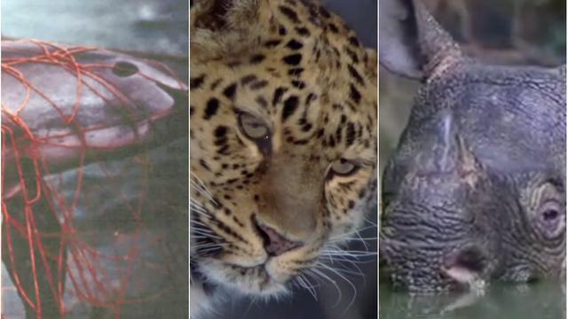 Drie zeldzame, met uitsterven bedreigde dieren