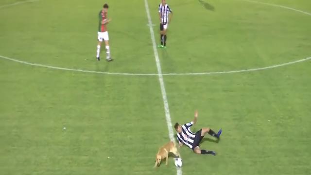 Hond tackelt Argentijnse voetballer tijdens wedstrijd