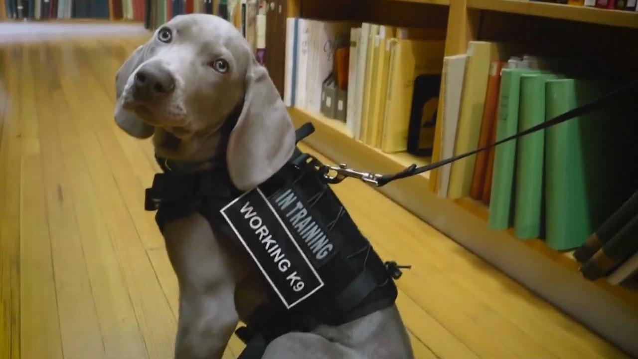 Museum VS stelt hond aan tegen motten
