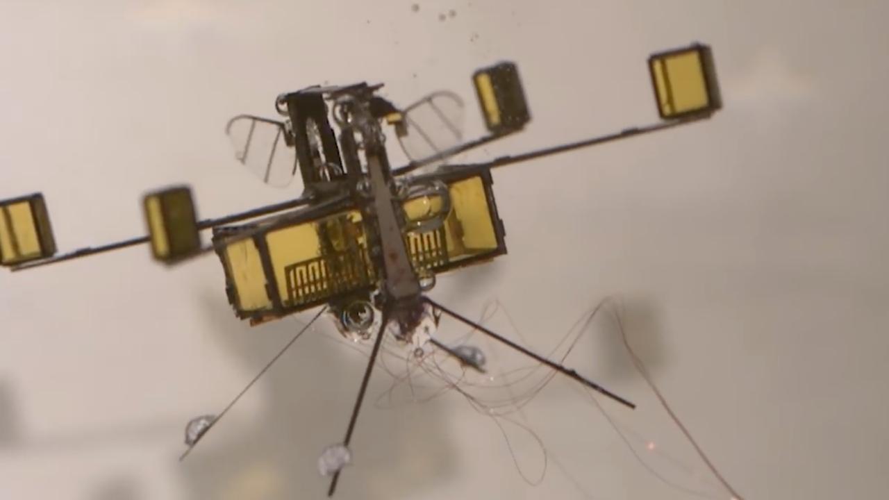 Insect-robot kan vliegen, zwemmen en opstijgen vanaf water