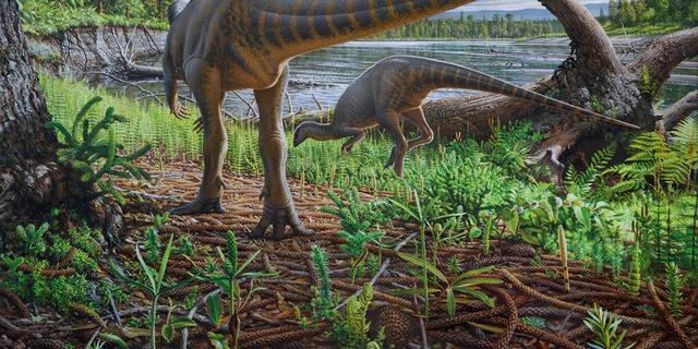 Fossiel van ruim honderd miljoen jaar oude dinosaurus gevonden bij Australië
