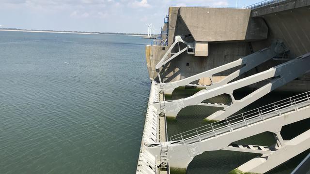 In Nederland uitgestorven vissoort aangetroffen bij Haringvlietdelta