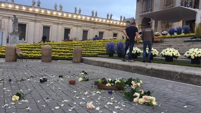 'Meeuwen vernielen deel Nederlandse bloemen bij Sint-Pieter'