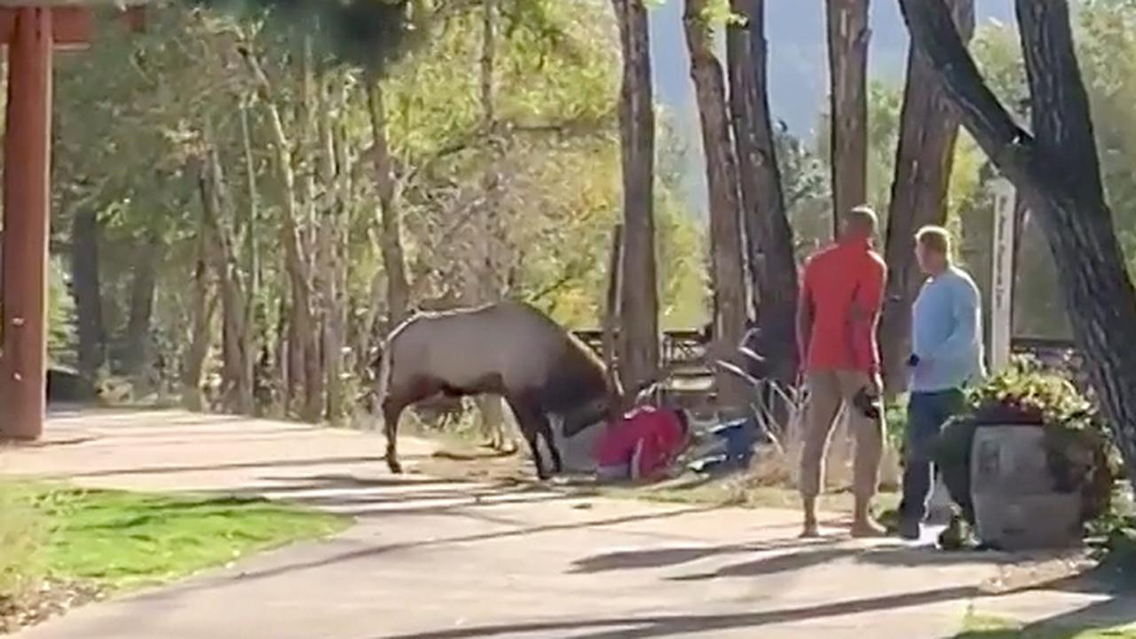 Bronstig hert valt wandelaars aan in Amerikaans natuurpark