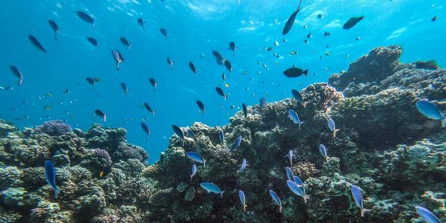 Onderzoekers: Een zesde van zeeleven is binnen tachtig jaar verdwenen