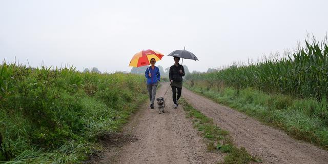 Weerbericht: Overwegend regenachtig met erg zachte temperaturen