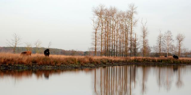 Eerste officiële vorst van het najaar gemeten: -0,2 graden in De Bilt