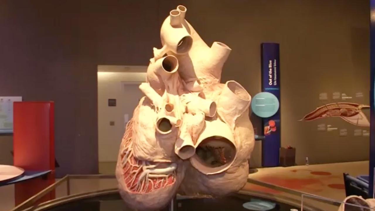 Grootste hart ter wereld tentoongesteld in Canada