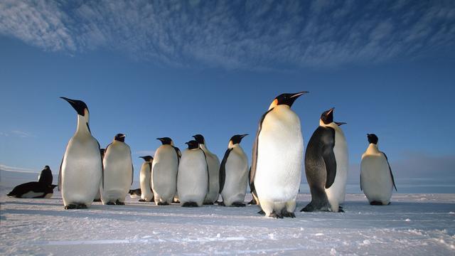 NUcheckt: Waarom er ook op de Zuidpool steeds minder ijs is